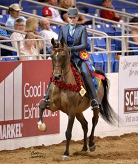 2016 Scottsdale Horse Show Results