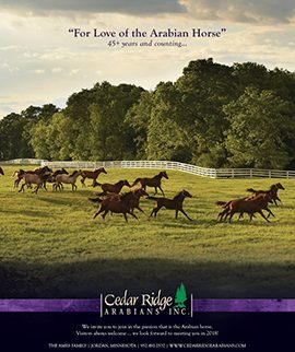 For Love of the Arabian Horse