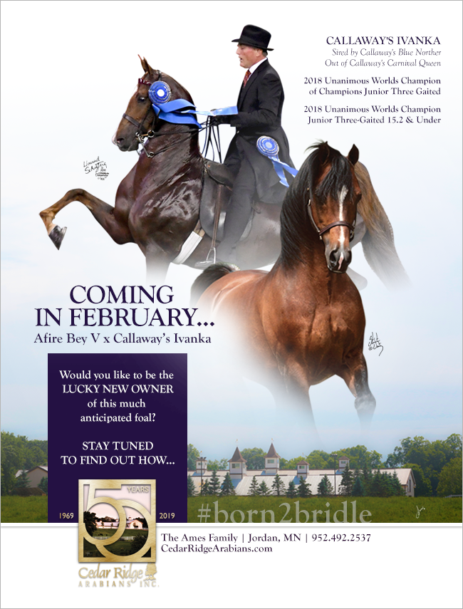 Coming in February #born2bridle