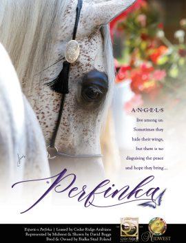 Angels Live Among Us…Perfinka