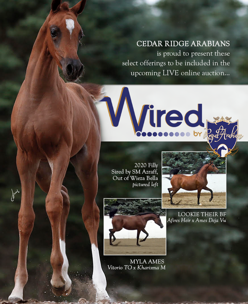 Available from Cedar Ridge in the WIRED Auction…