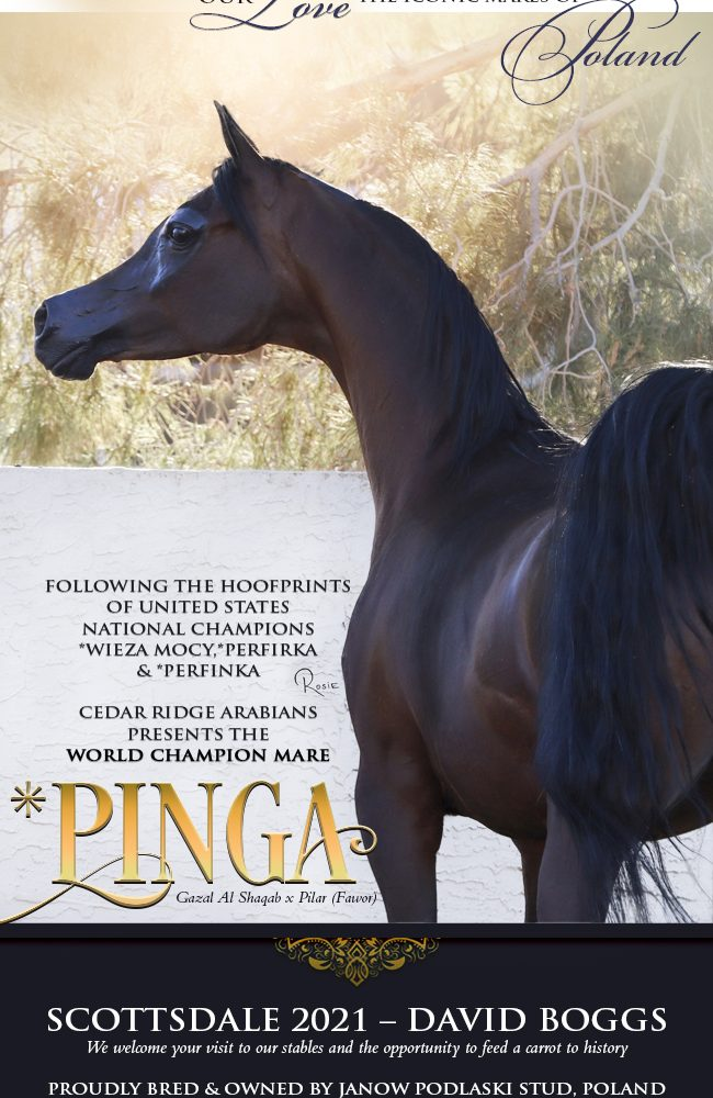 From Poland With Love – * Pinga